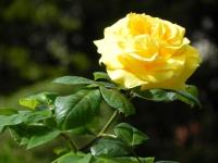 DSCN0668_blog
